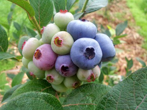 blueberry0710